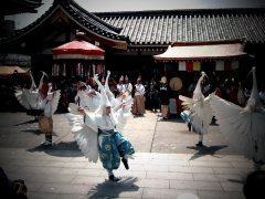 Heron-blanc-danse-parade.jpg